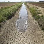 drought agriculture